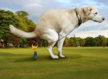 giant pets