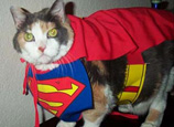 pets with superpowers